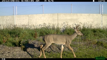 Young Buck on Overpass.